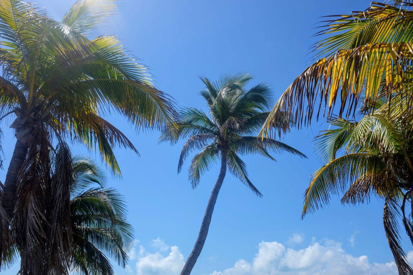 Hibiscus & Nomada : - - Playa Norte