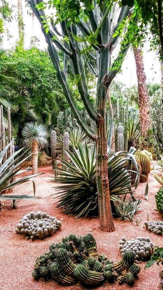 Hibiscus & Nomada : - - Jardin Majorelle